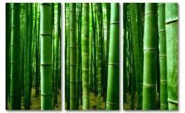 Canvas bamboe bos