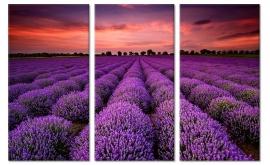 Zonsondergang Lavendel Velden