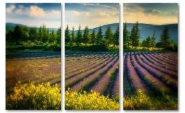 Schilderij Lavendel veld