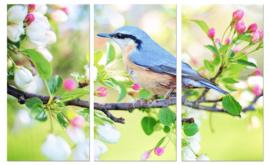 Vogel in lente: foto schilderij