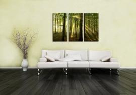 Canvas doek Zonnestralen in het Bos
