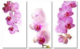 Roze Orchidee Triptiek