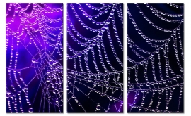 Foto Schilderij Spinnenweb