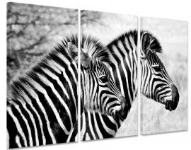 Schilderij Zebra Tweetal