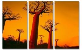Baobab bos