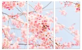 Cherry Tree: foto schilderij