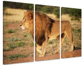 Drieluik Canvas Schilderij Leeuw II