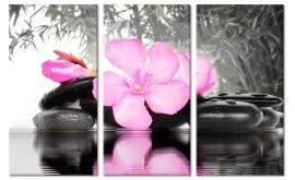 Roze Oleander Bloem