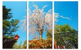 Onder de Sakura