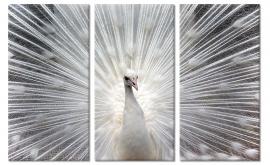 Wanddecoratie Witte Pauw