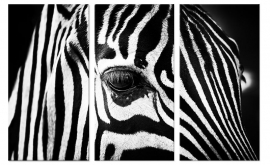Canvas Schilderij Zebra Close Up