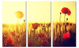 Canvas doek Klaprozen bij Zonsondergang