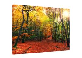 Canvas schilderij bos in de herfst