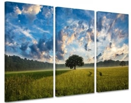 Schilderij Boom in Veld