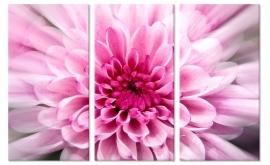 Canvas schilderij Pink Flower