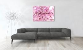 Cherry Blossom Canvas Art