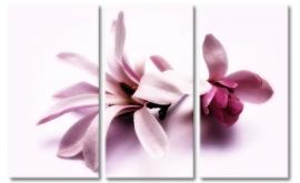 Magnolia bloemen schilderij
