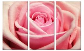 Schilderij Roze Roos