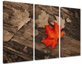 Schilderij Herfstbladeren