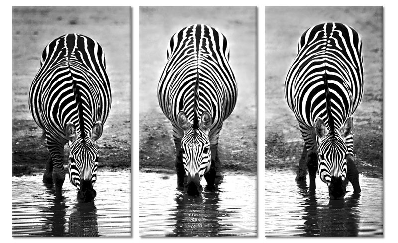 Canvas Drieluik Drinkende Zebra's