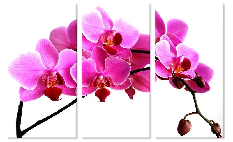 Canvas Schilderij Orchidee