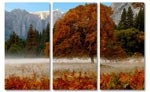 autumn-herfst-yosemite-boom-canvasdoek.jpg