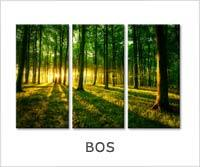 schilderijen bos