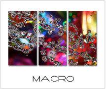 macro foto schilderijen drieluik kopen