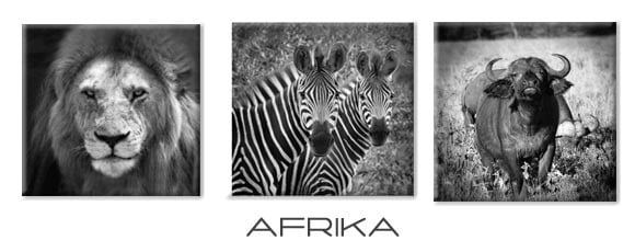 mix-and-match-afrika-canvas-doeken.jpg