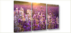 Foto schilderij lavendel op canvas