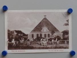 Friesland, Naar de melkplaats