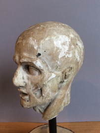 Model van spieren hoofd