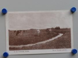 Friesland, In de Friesche weide