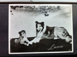 Lassie Nr 5449