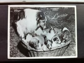 Lassie Nr 5394