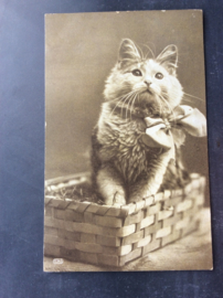 Poes 1, 1916