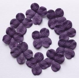 Hydrangea, paars