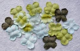 Hydrangea, groen mix