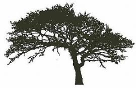Eikenboom.