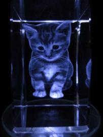 laserblok Kitten
