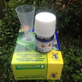 Buxus against fungal diseases