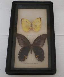 Vlinder in lijstje VERKOCHT