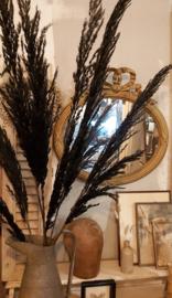 Pampas gras, zwart