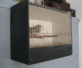 Brocante vogelkooitje