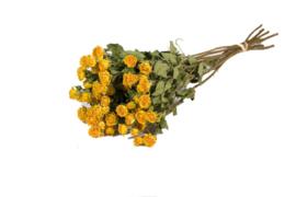 Gedroogde trosrozen geel