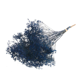 Broom bloom blue