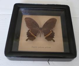 Vlinder in lijst VERKOCHT