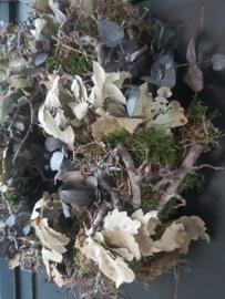 Eucalyptus krans Ariadne