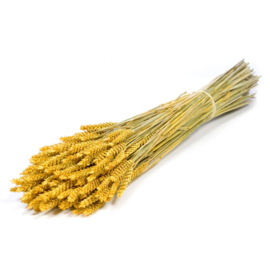 Tarwe Yellow