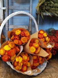 Helichrysum, gedroogde bloemen